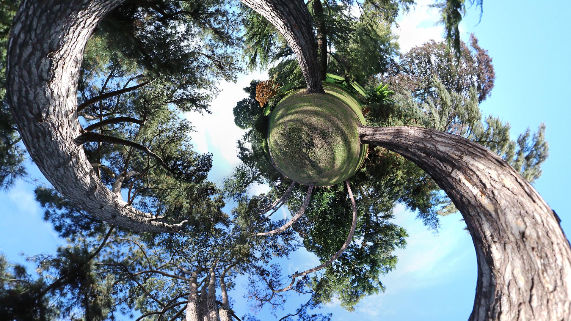 arbres-6573