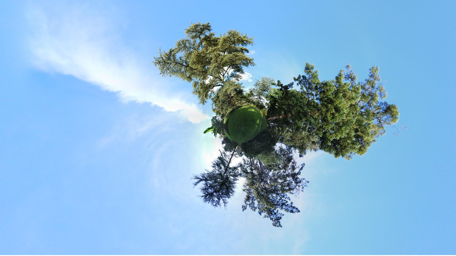 arbres-6669a