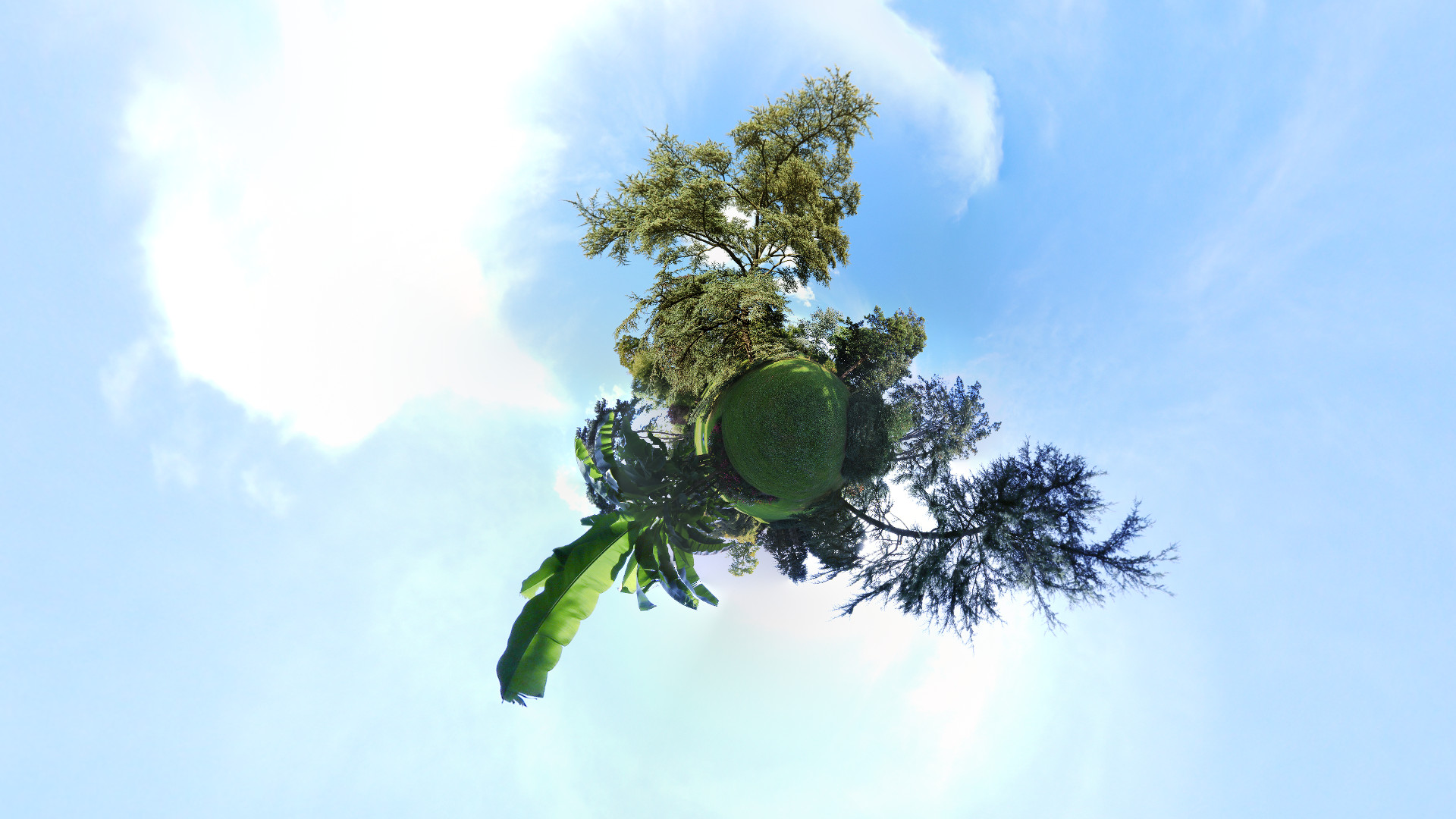 arbres-6669b