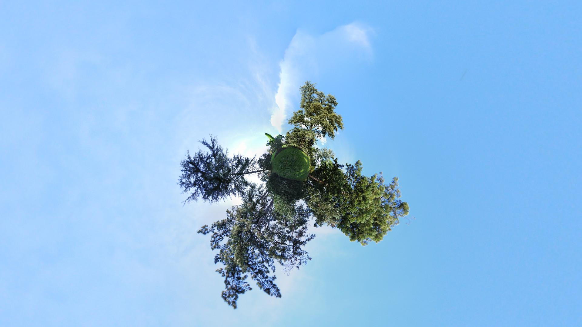 arbres-6669c