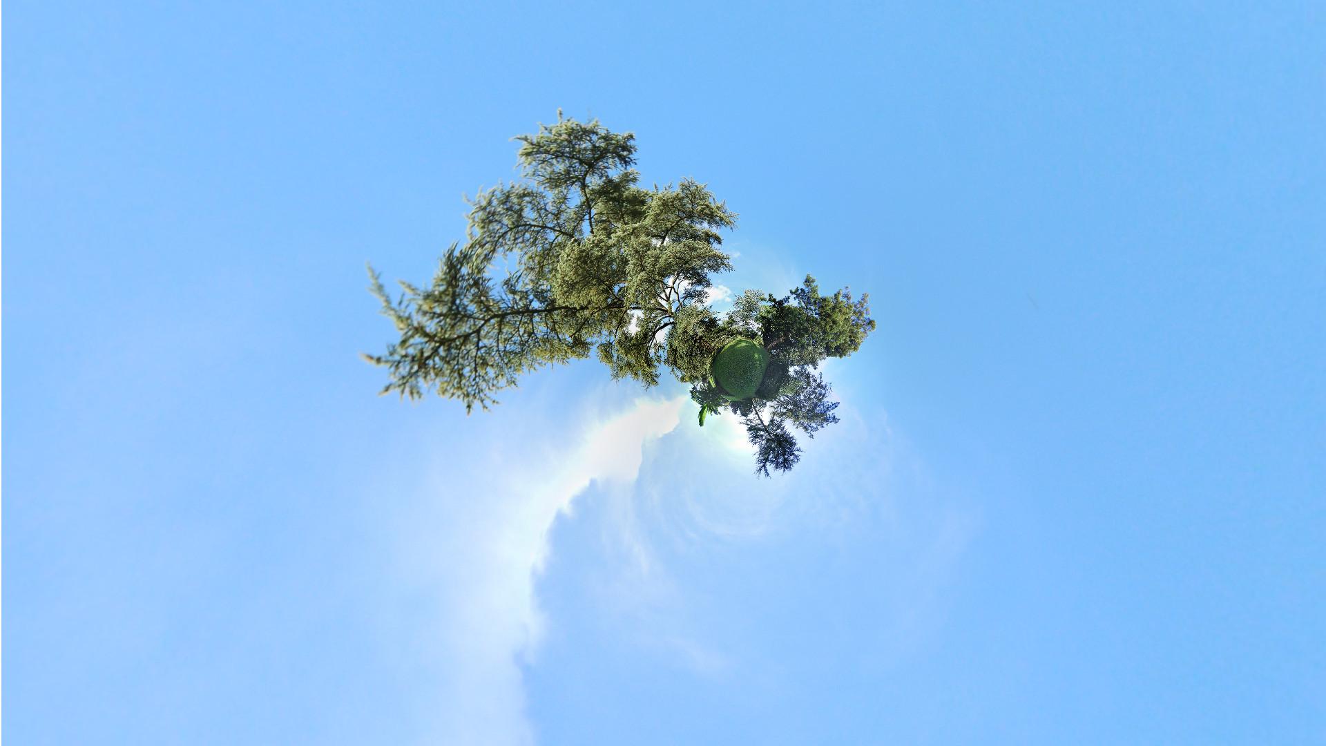 arbres-6669f