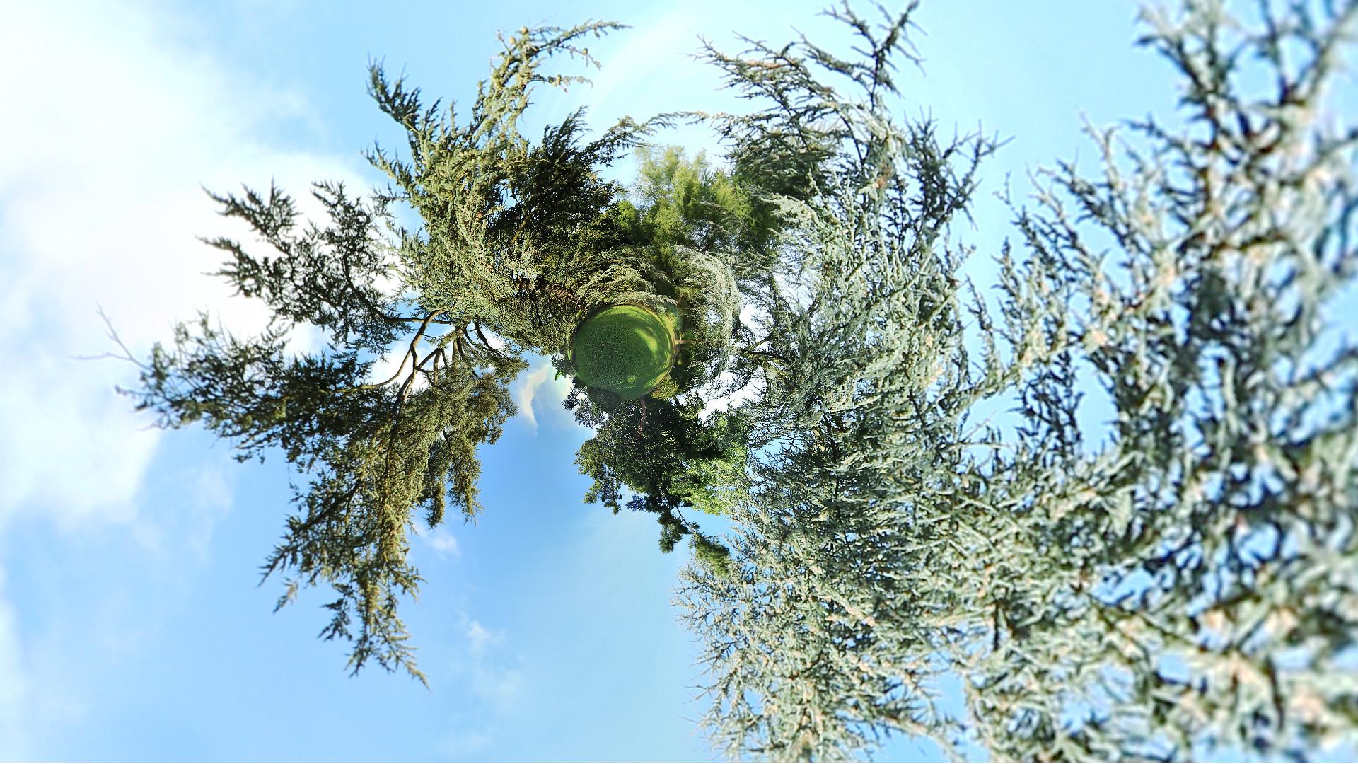arbres-6669g