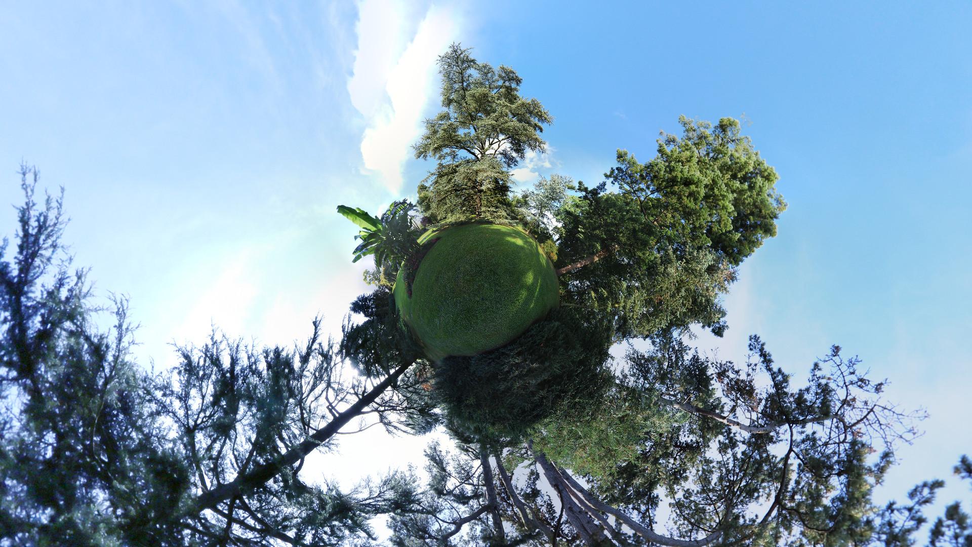arbres-6669h
